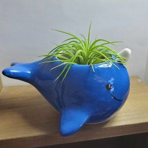 Other - Ceramic Blue Whale Planter with Live Air Plant 5""
